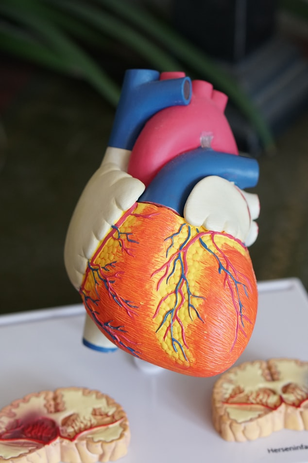 Common Genetic Heart Problems And How To Test For Them